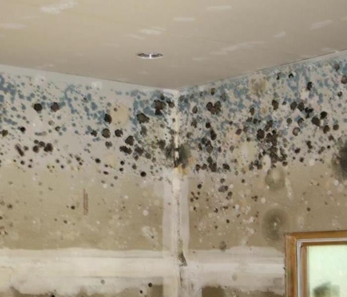 Mold Remediation SERVPRO mold damage in your Beecher home
