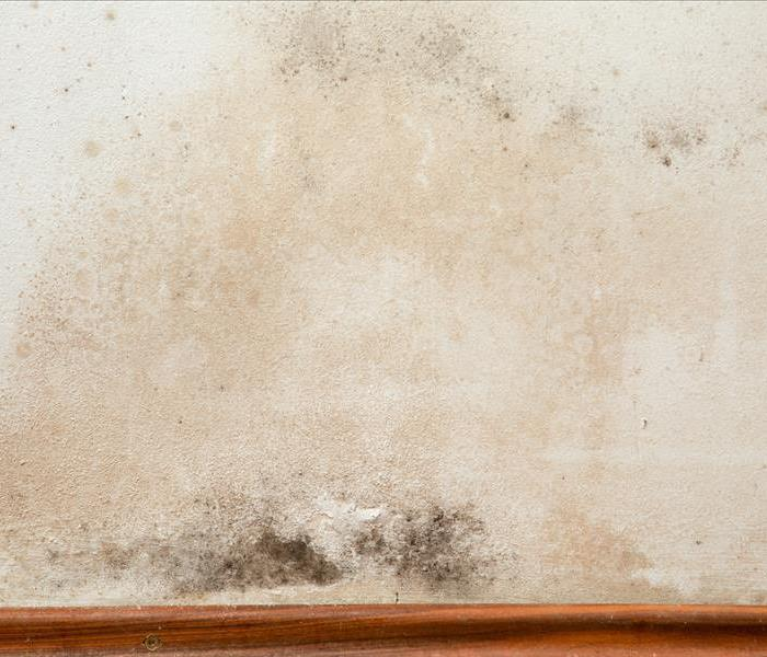 Mold Remediation Understanding mold in Chicago Heights