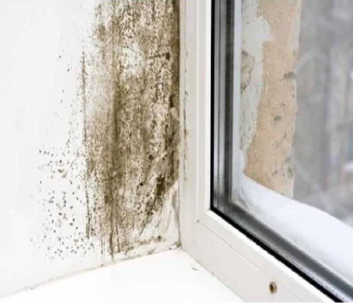Commercial Mold in your commercial building in Crete?