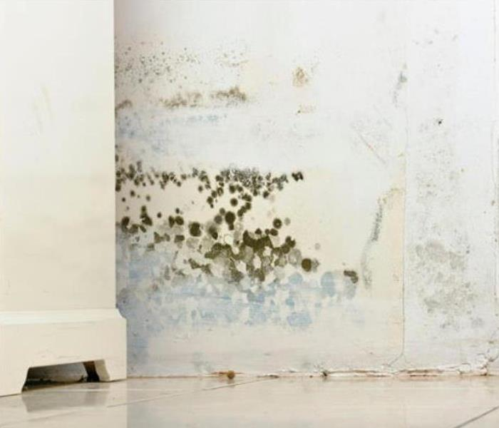 Mold Remediation SERVPRO can handle your school's mold problem